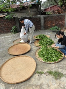 We began by spreading out the freshly harvest leaves onto reed trays to dry. I was amazed by how picturesque this was - it looked exactly like what I had seen before when reading about tea-making.
