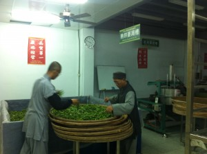 The monks making tea. It is withering/oxidizing here. The day that I visited was far too rainy for outdoor withering. Their facilities were very new and clean. It looked like they had only one machine for most of the tea making steps, indicating that they only make tea in small batches.